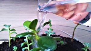 Água e plantas