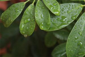 Água nas plantas